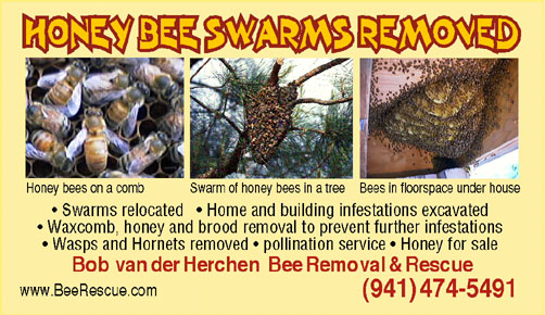 Bee Removal Florida