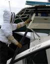Removing bees on Sheriff's boat
