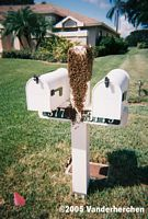 bees on mailbox